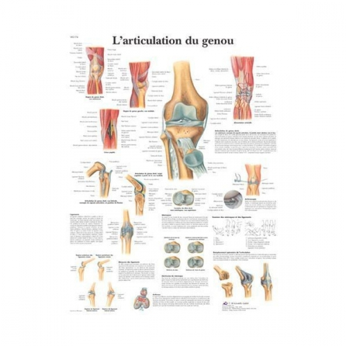 planche-anatomique-l-articulation-du-genou-vr2174l.jpg