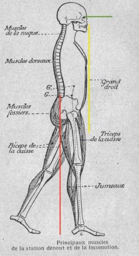 kiné,nimes,renforcement,abdominaux,muscle,prévention,respiration,digestion,équilibre